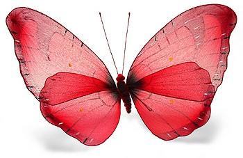 alfa rosso papillon rouge. Black Bedroom Furniture Sets. Home Design Ideas